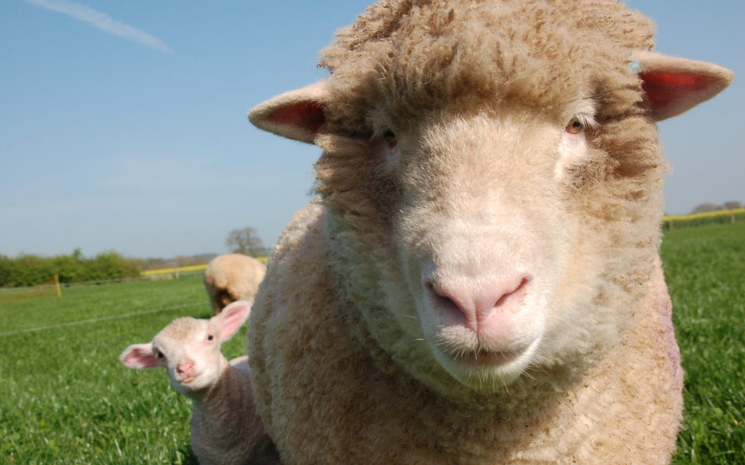 Why do we traditionally eat lamb at Easter?