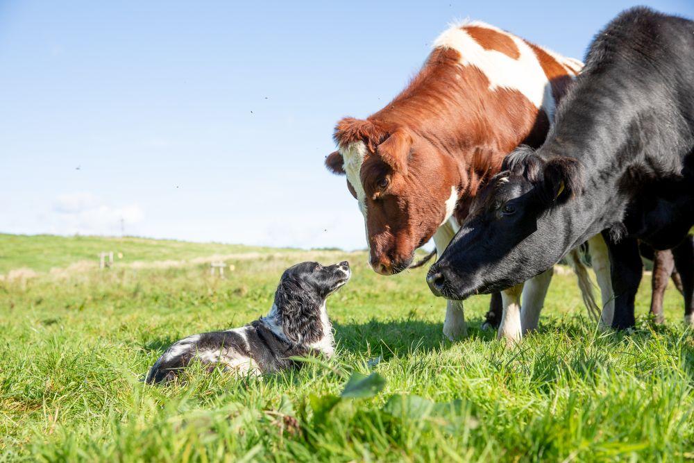 It's official – organic farm status achieved!